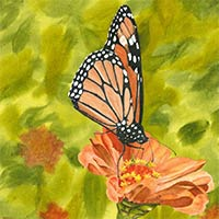 watercolor of monarch butterfly on flower